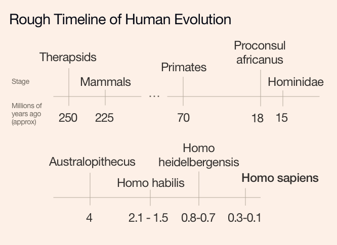 A rough timeline of human evolution
