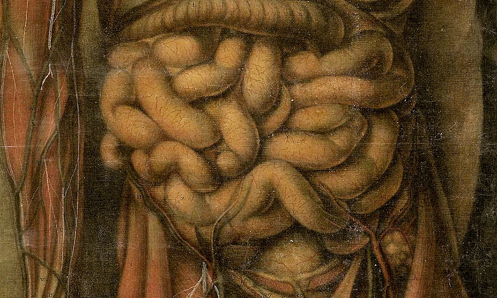 Historical depiction of the digestive system